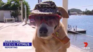 Pipe Smoking Dog Saves Life. Being Called Hero