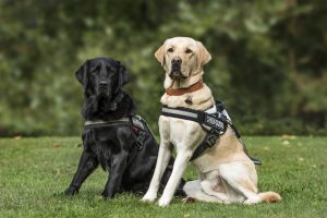 HERFERVILLE HOSTS BENEFIT FOR SOUTHEAST GUIDE DOGS